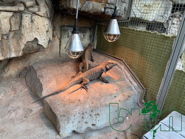 BION reptile breeding