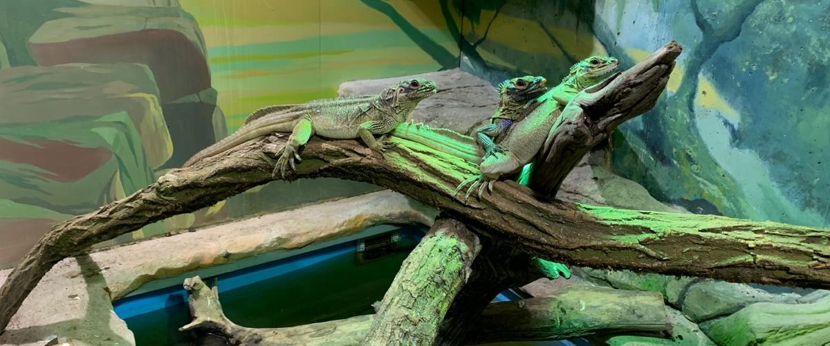 BION Breeding Center quality captive-bred reptiles for sale and wholesale