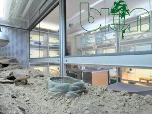 captive-bred reptiles laboratory