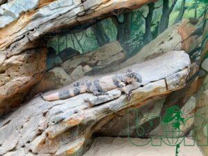 captive-bred reptiles laboratory 002