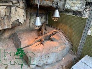 captive-bred reptiles laboratory 004