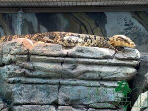 captive-bred reptiles laboratory 005